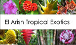 El Arish Tropical Exotics Logo